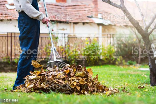 Photo of Man collecting fallen autumn leaves in the yard