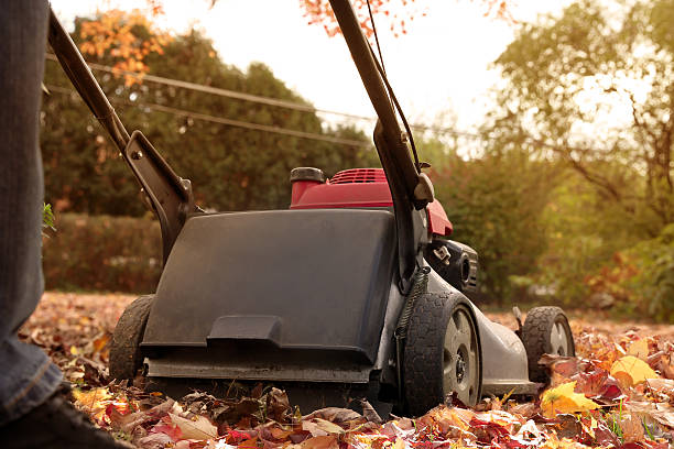 Man  collecting  old autumn leaves by Lawn Mover stock photo