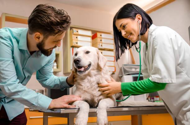 hombre consolando a su perro en la mesa del veterinario - veterinario fotografías e imágenes de stock