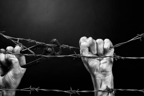 Man cuting a barbed wire fence. Black and white. stock photo