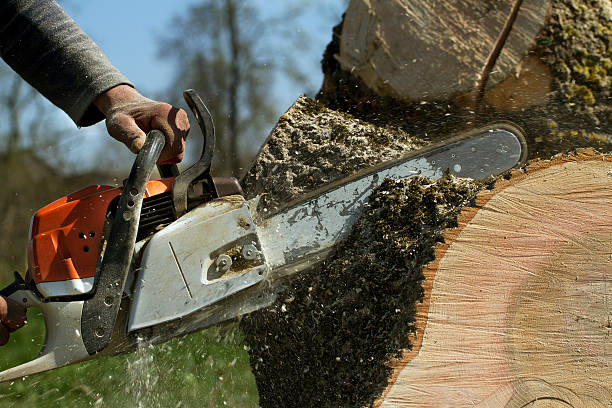 man cuts a fallen tree. - boomstronk stockfoto's en -beelden