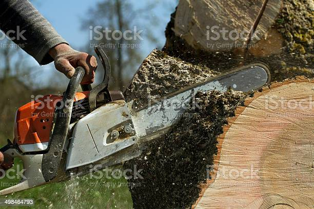 Photo of Man cuts a fallen tree.
