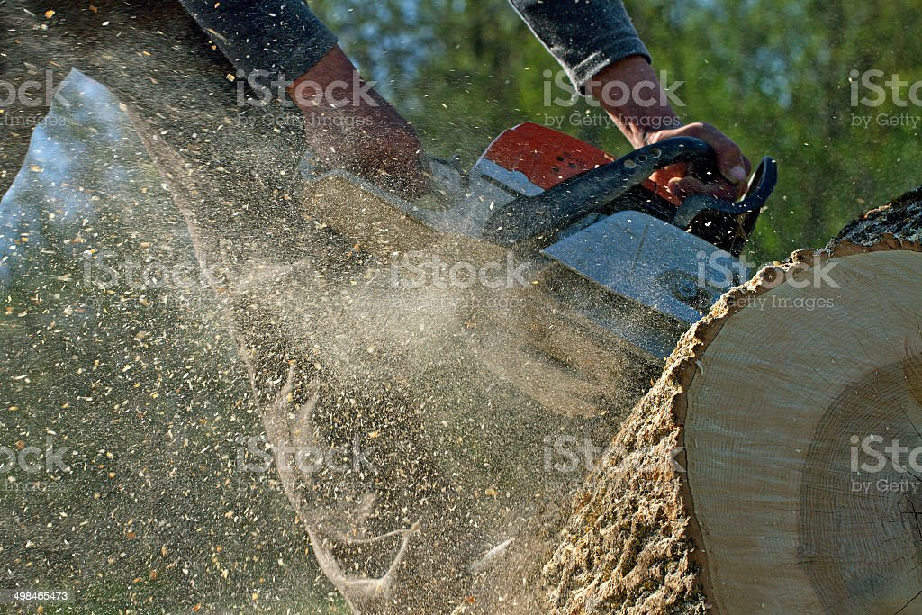 Man cuts a fallen tree. stock photo