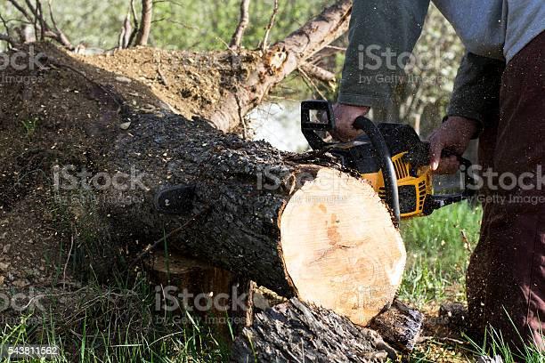 Photo of Man cuts a fallen tree