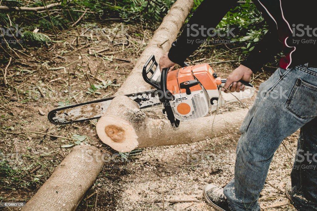 Man cuts tree stock photo