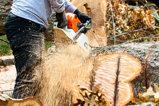 A landscaper using a chainsaw to cut up a tree that fell during tropical storm Isaias on Long Island New York.