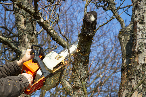 istock Man cutting branch tree using chainsaw 946776982