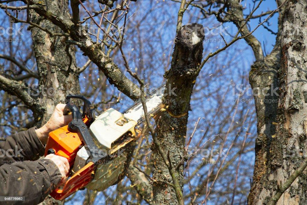 Man cutting branch tree using chainsaw stock photo