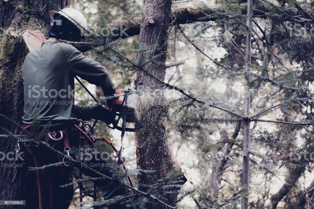 Mann Schneiden von Ästen auf Baum – Foto