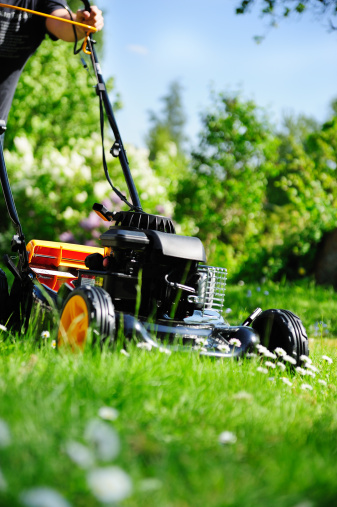 Man Cutting Grass Mowing The Lawn Stock Photo - Download Image Now