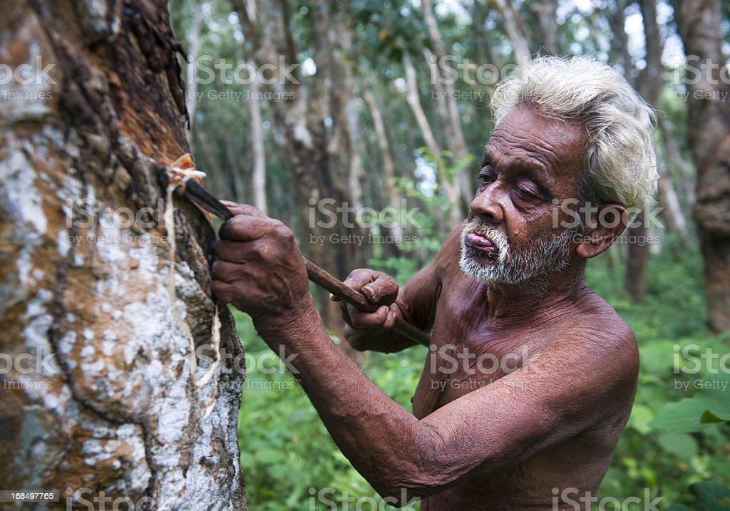 Homem Cortando Seringueira - foto de acervo