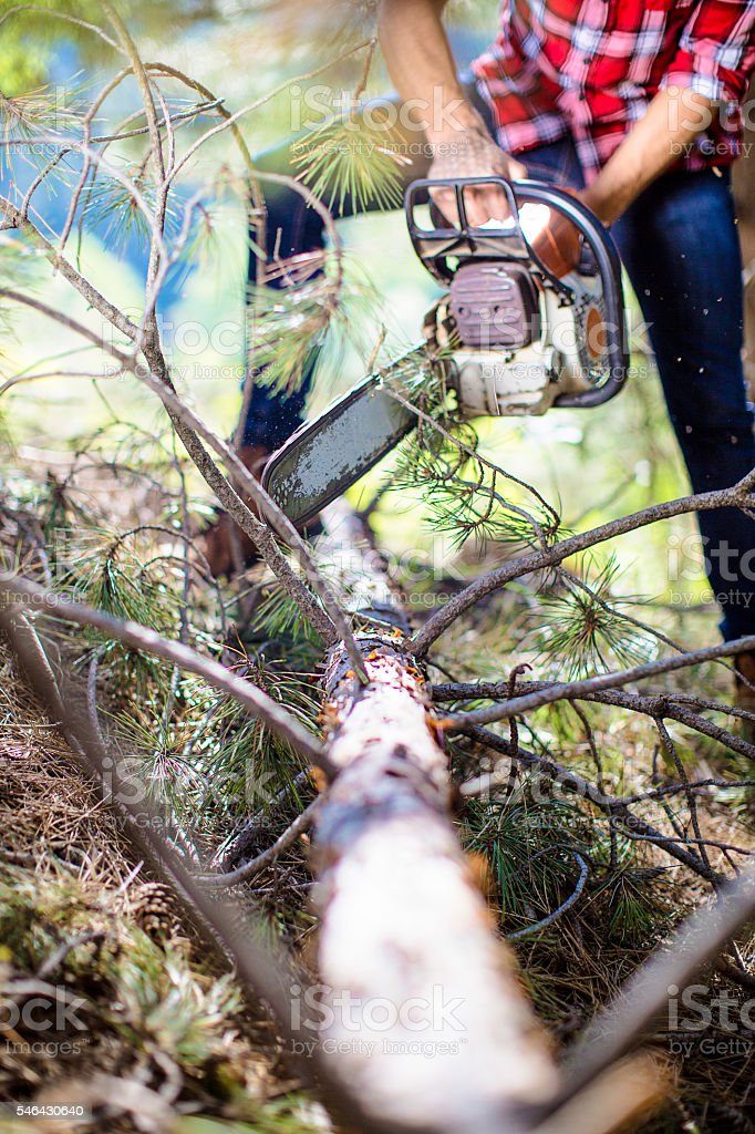 Man cutting the tree with chainsaw stock photo