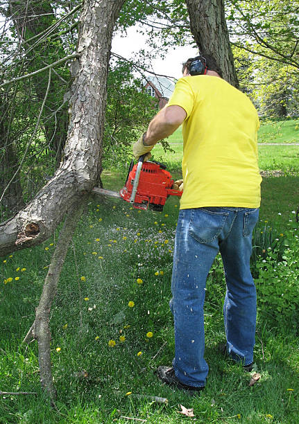 Man cutting tree branch with a chainsaw stock photo