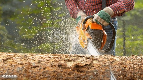 Lumberjack with chainsaw cutting log in forest.