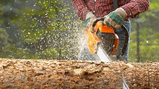 man cutting tree in forest - chainsaw stock photos and pictures