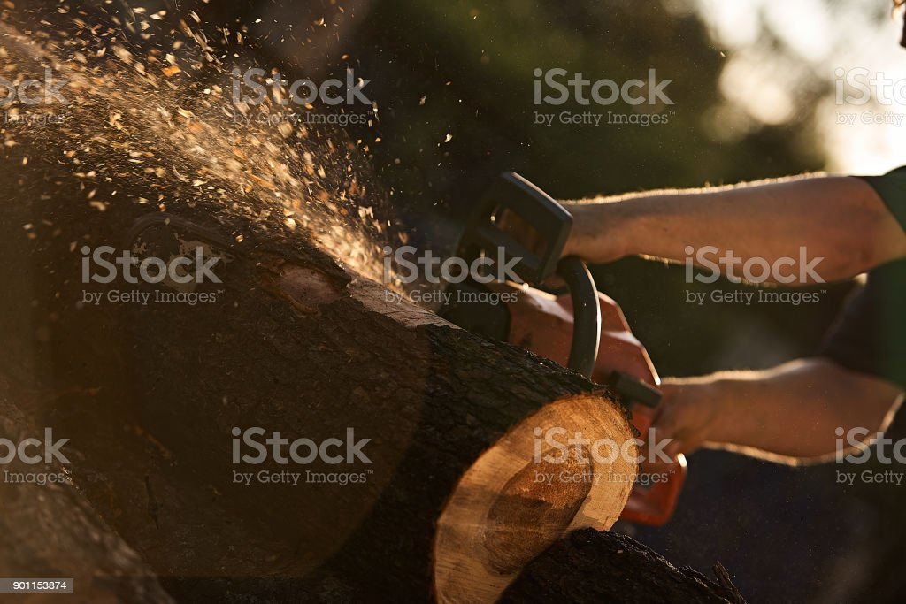 A man cutting tree with chainsaw. stock photo