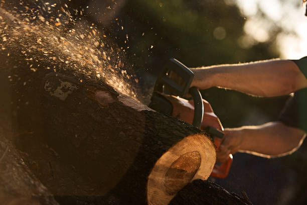 A man cutting tree with chainsaw. A man cutting tree with chainsaw. Man at work forester stock pictures, royalty-free photos & images