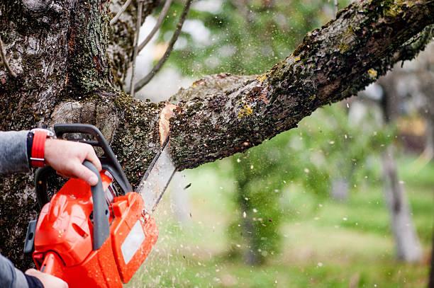 człowiek cięcia drzew za pomocą elektryczna piła łańcuchowa i zawodowe - ciąć zdjęcia i obrazy z banku zdjęć