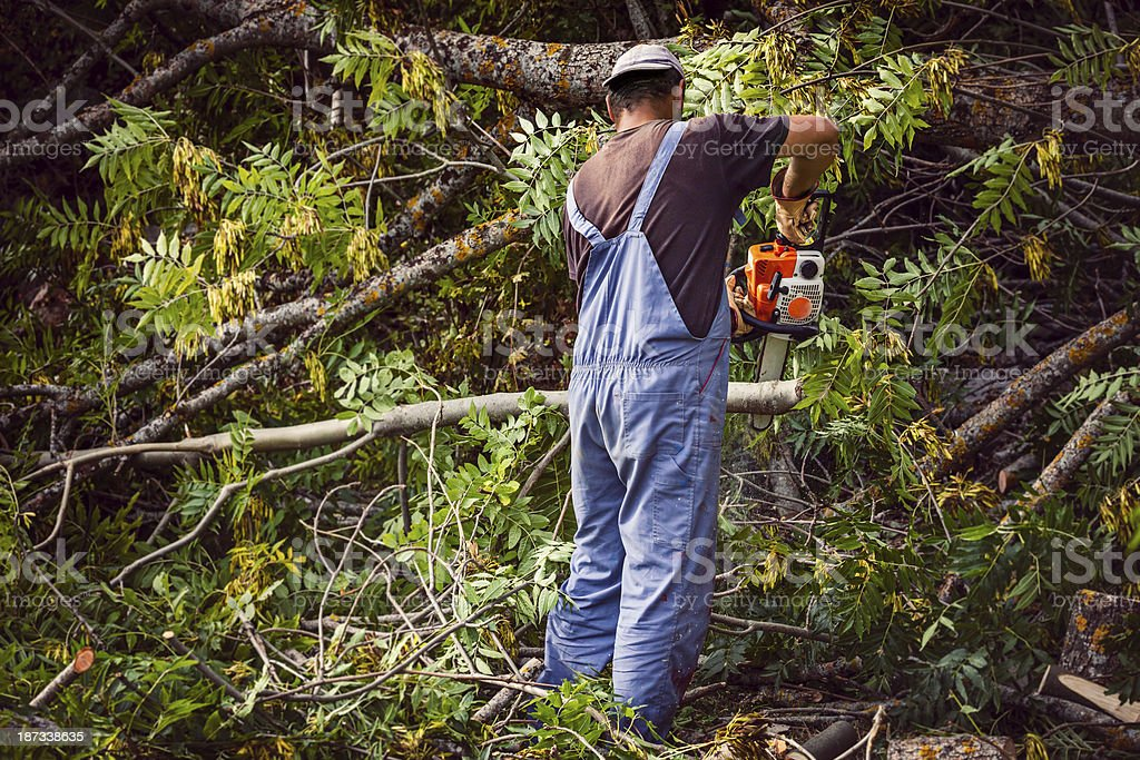Man cutting wood with a chainsaw stock photo