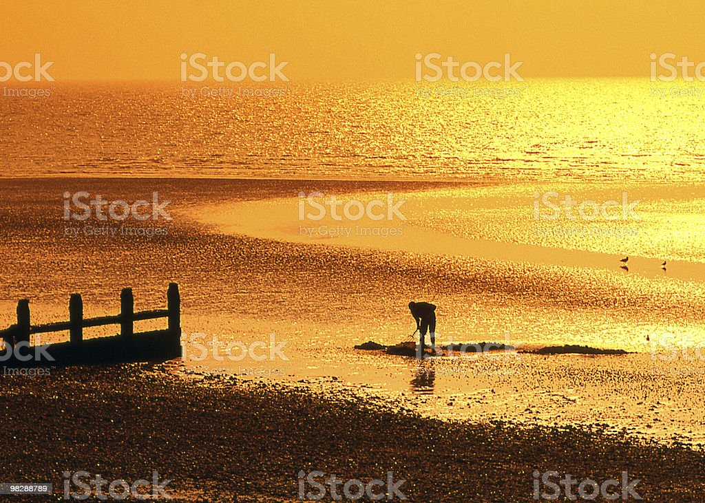 Man digging for bait on Worthing Beach. West sussex. England royalty-free stock photo