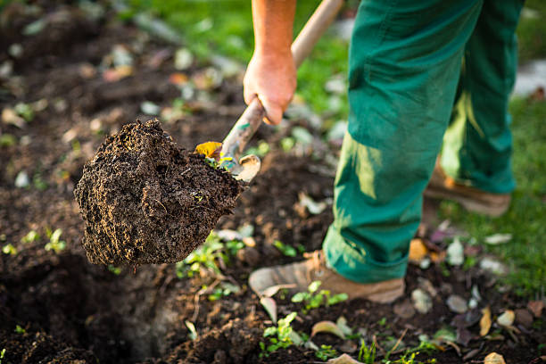 Man digging the garden soil with a spud Senior man gardening in his garden, watering plants, using garden equipment, digging the garden soil with a spud mattock stock pictures, royalty-free photos & images