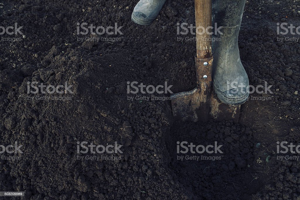 Man digs a hole stock photo