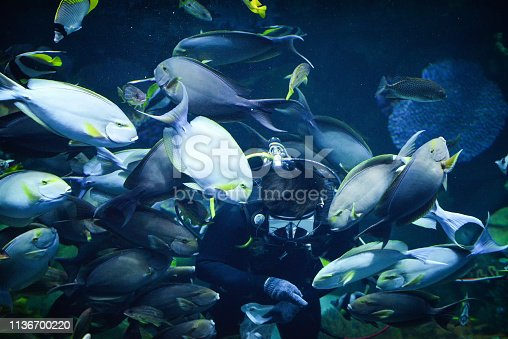 istock Man dive dip feeding school of fish 1136700220