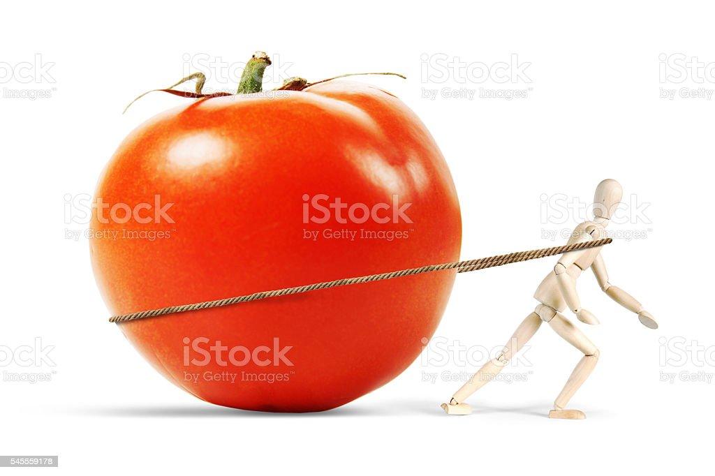 Man drags a huge ripe tomato - foto de acervo