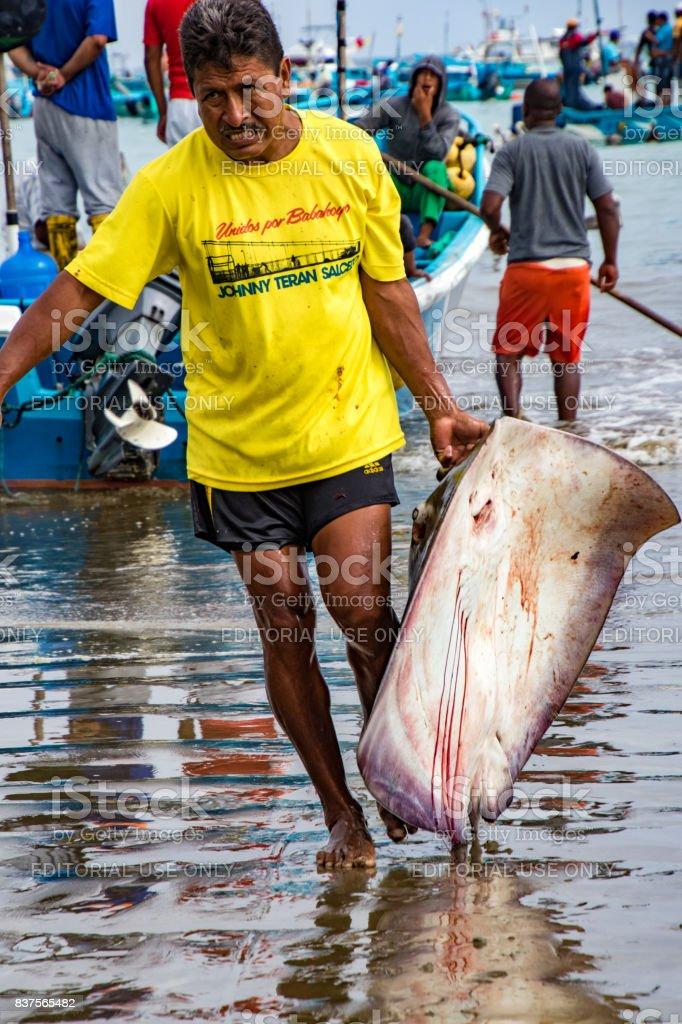 Man drags freshly caught flounder on beach stock photo