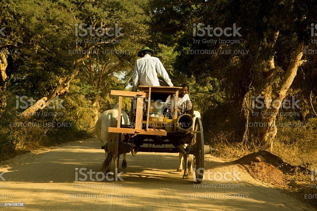 Man driving bullock cart, Myanmar, Asia stock photo