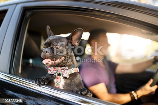 A man and his dog inside car