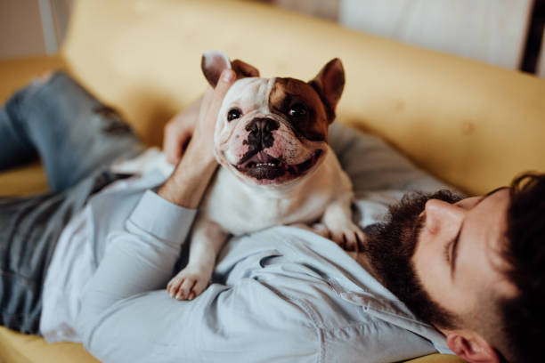 Man embracing his dog Man embracing his dog bulldog stock pictures, royalty-free photos & images