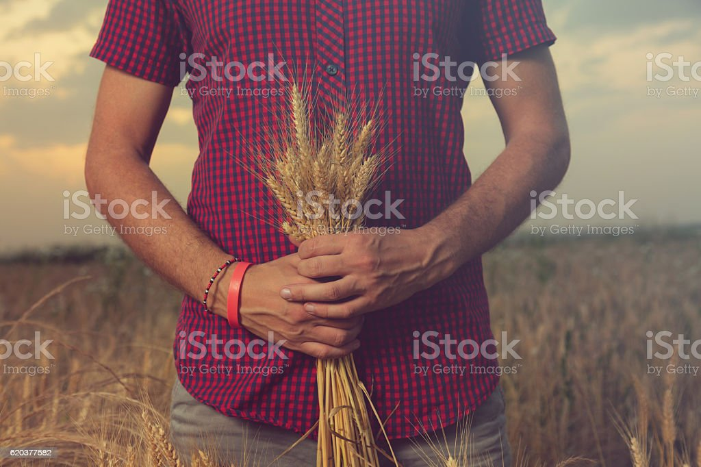 Man enjoying in nature. Wheat field. zbiór zdjęć royalty-free