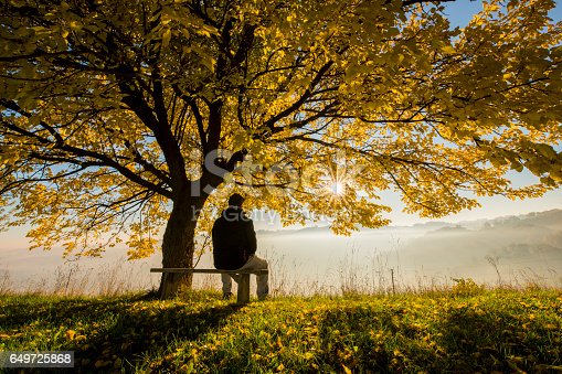 Rear view of man sitting on bench under tree. Full length of male is looking at view. He is enjoying morning fog.