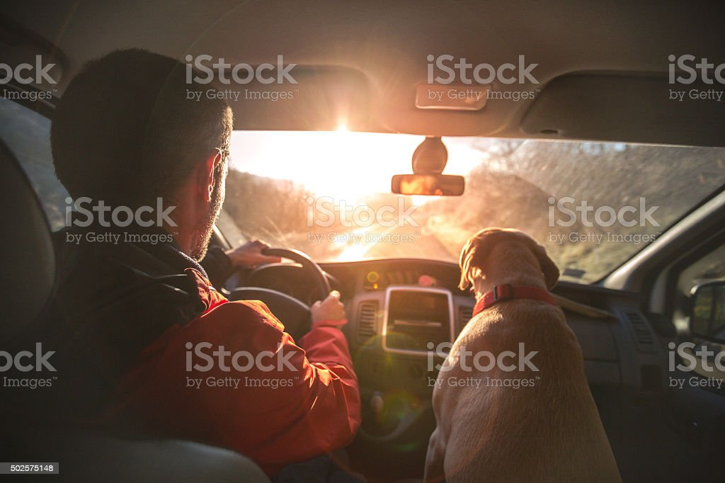 Man enjoys the ride home as much as his dog stock photo
