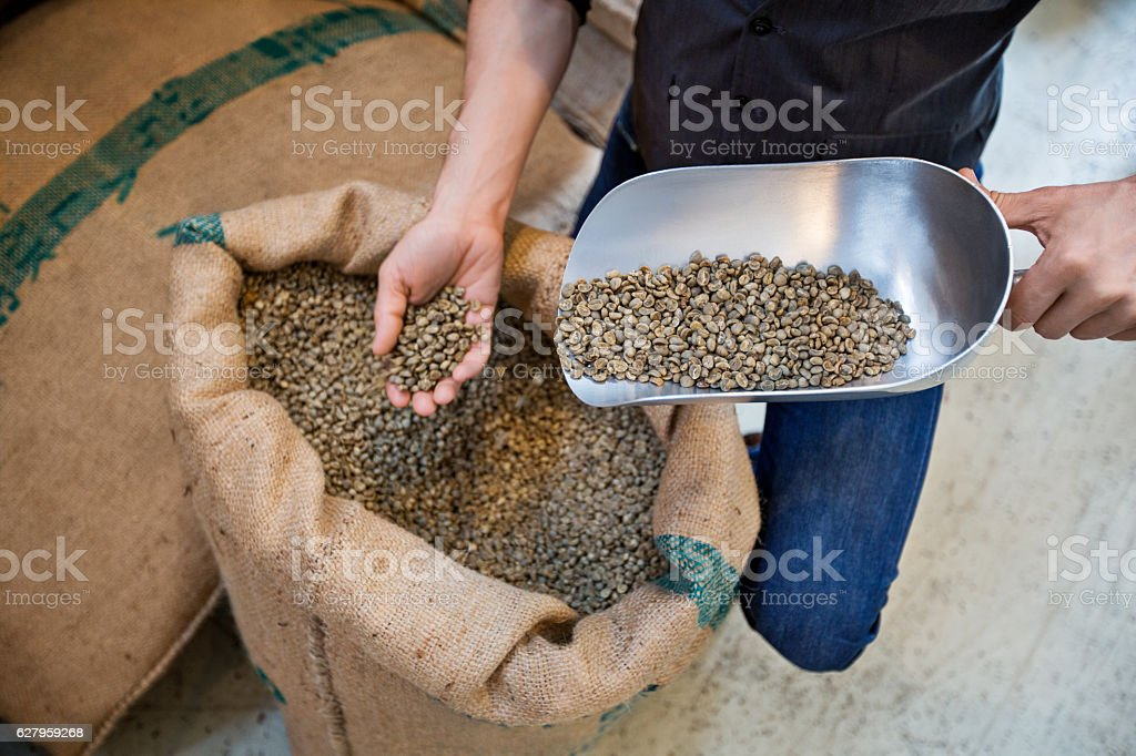 Man examining quality of raw coffee beans stock photo