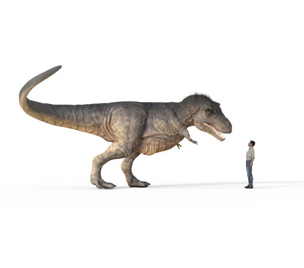 man face to face with t - rex white on white background - tyrannosaurus rex stock photos and pictures