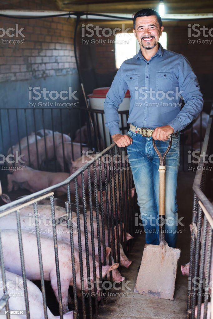 Man farmer standing in pigsty stock photo