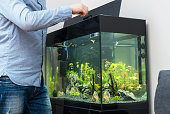 Man feeding fishes in the aquarium.