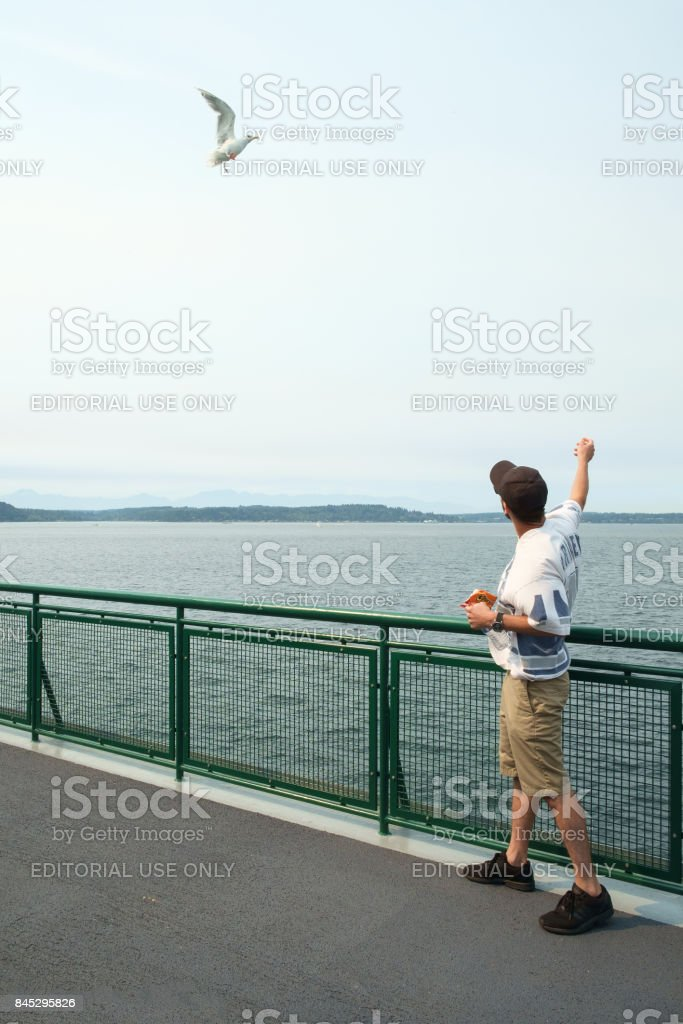 Man feeding seagulls in flight stock photo