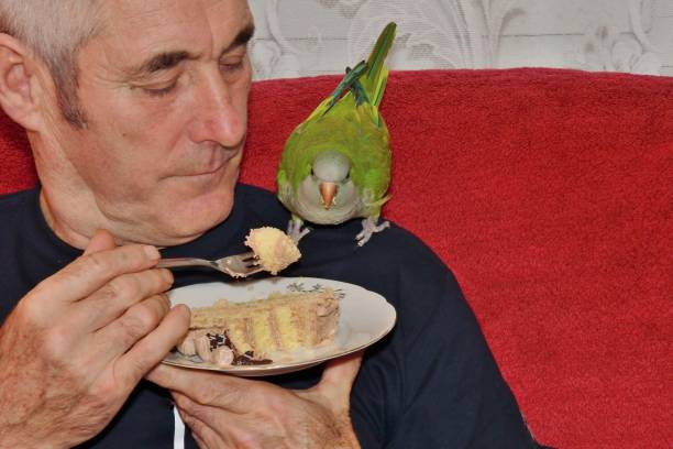 Man feeding the green parrot from the plate with animal love stock photo