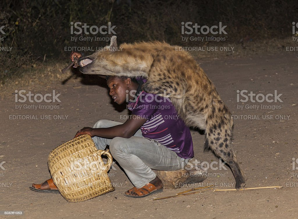 Man feeds a spotted hyena. Harar. Ethiopia. stock photo