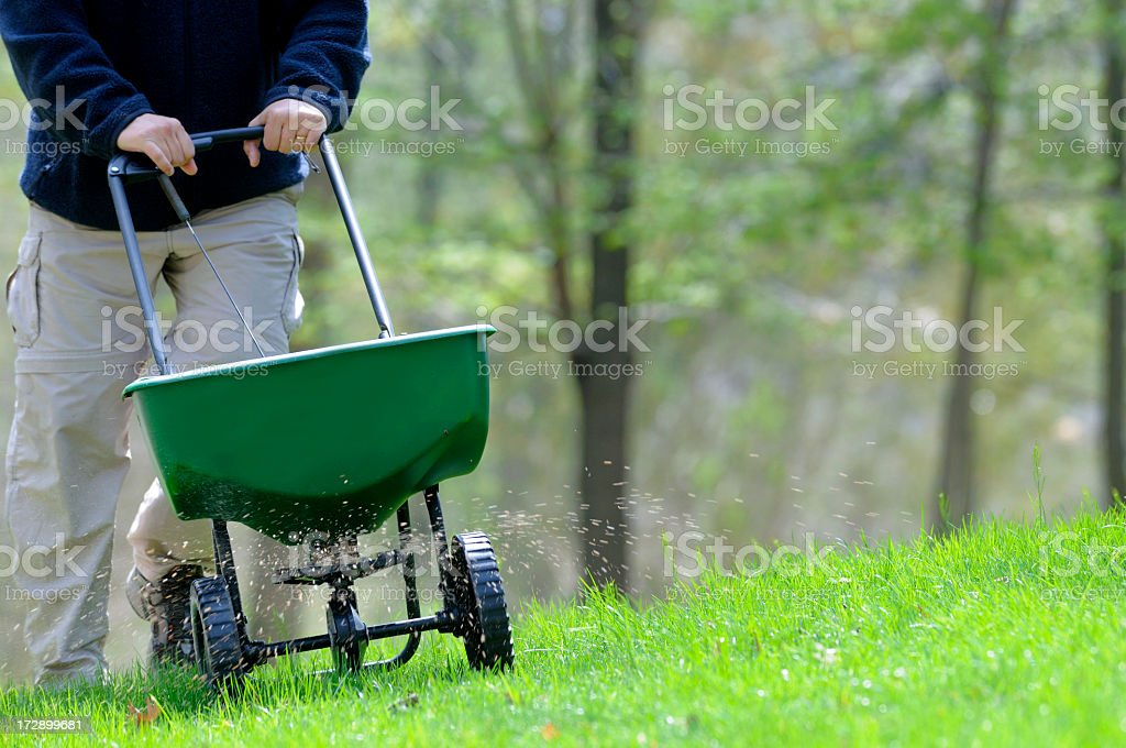 A man fertilizing a grassy lawn stock photo