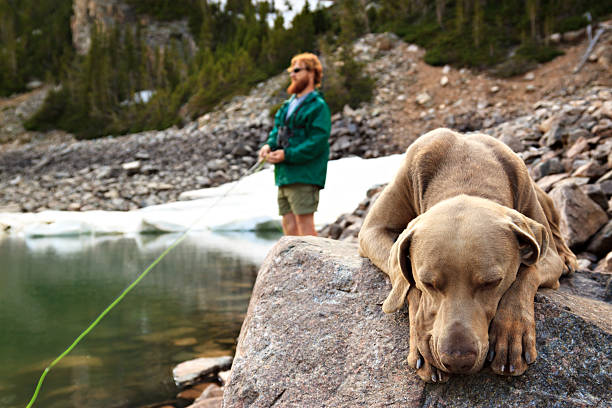 Man fishing while his dog sleeps stock photo