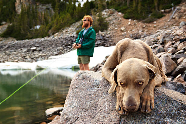 Man fishing with his dog stock photo