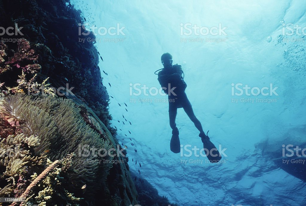 Man Floating In Blue Water royalty-free stock photo