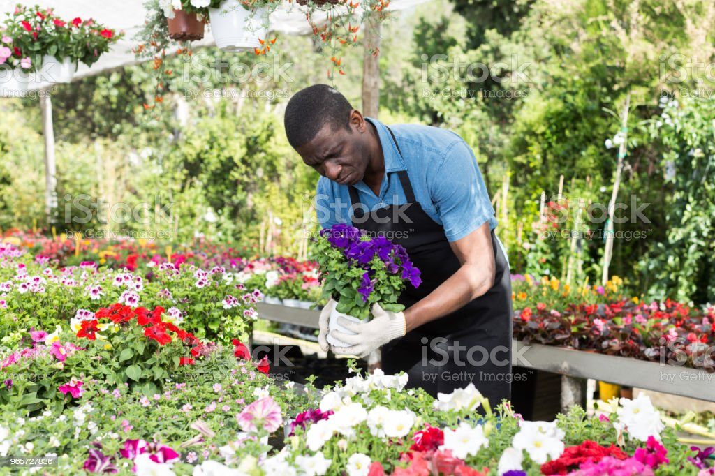 Man florist working in greenhouse - Royalty-free Adult Stock Photo