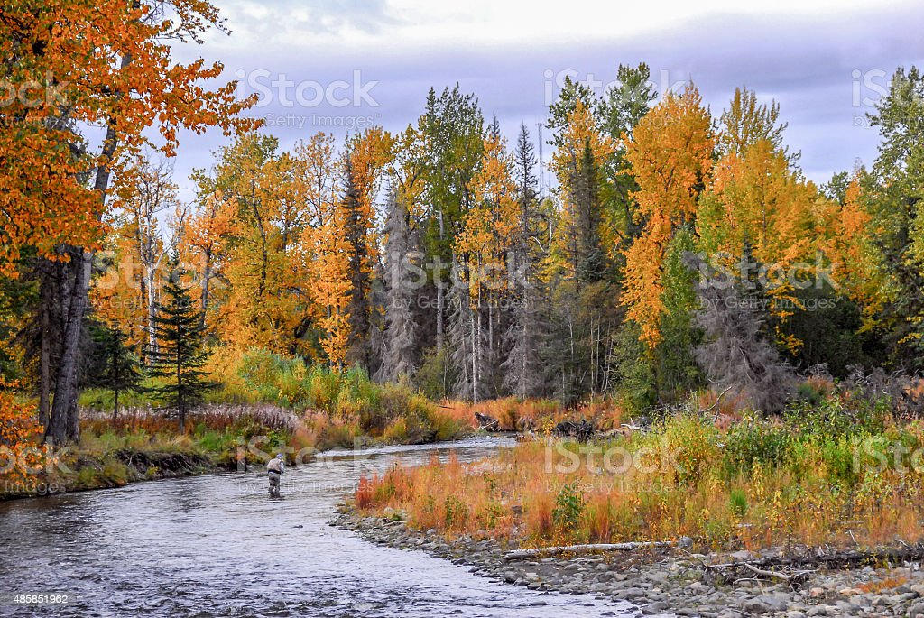 Man Fly Fishing in a river in Alaska during Autumn stock photo
