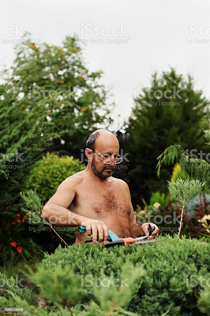Man gardener with clippers in hand making art cutting juniper. royalty-free stock photo