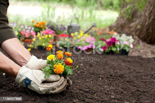 istock Man Gardening Background 1156537866